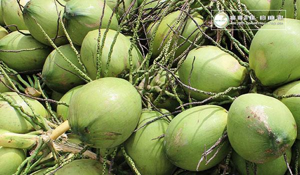 Nguyên liệu dừa được tuyển chọn kỹ càng